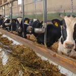 Tinerii fermieri, subventionati la agricultura