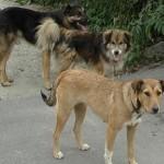 Terorizati de vecina care aduna cainii de pe strada