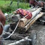 Sibienii continua sa fure lemn din Valcea