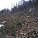 Sibienii fura lemne cu tractorul din padurile Valcii